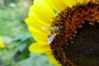 Honeybee. 2013.