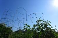 Tomato Monuments. 2013.